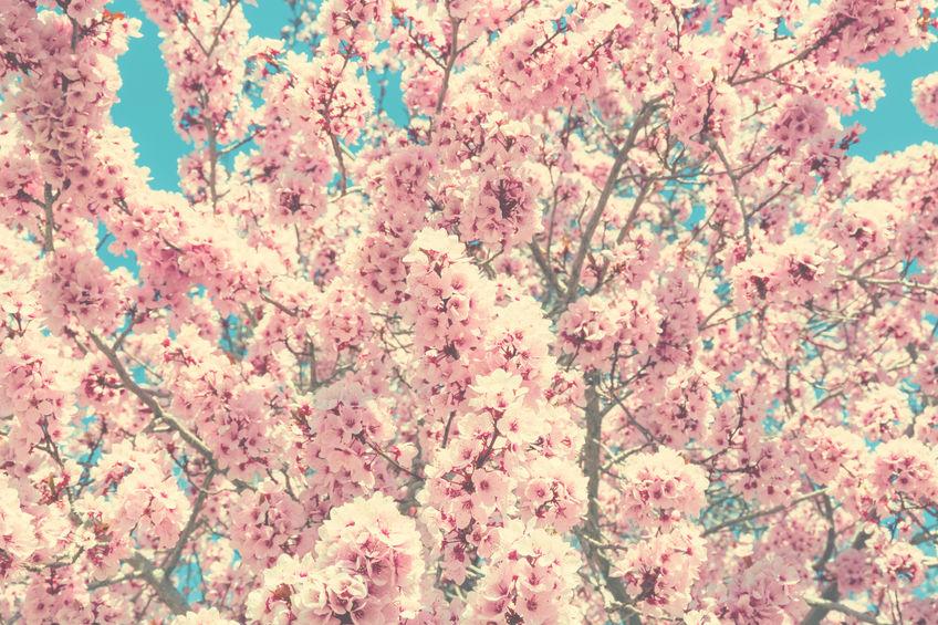 Пролетно чистене на проблеми